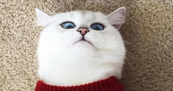 แมวพูดได้