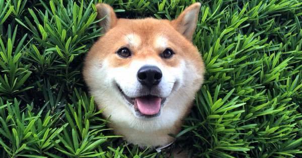 หมาน่ารัก