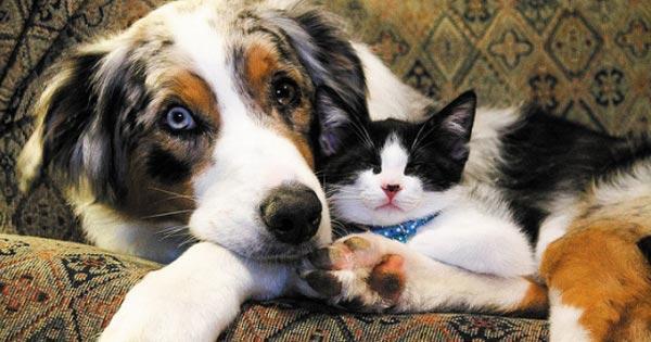 หมากับแมว