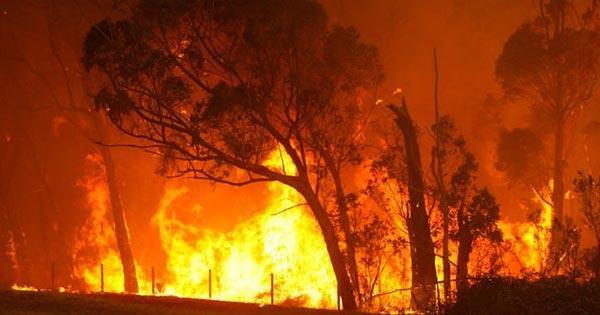 ไฟไหม้ป่า
