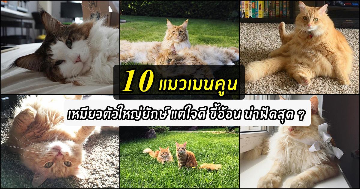 แมวเมนคูน