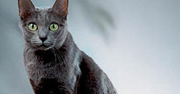 แมวสีสวาด