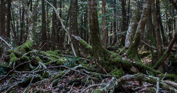 ป่าอาโอกิกาฮาระ