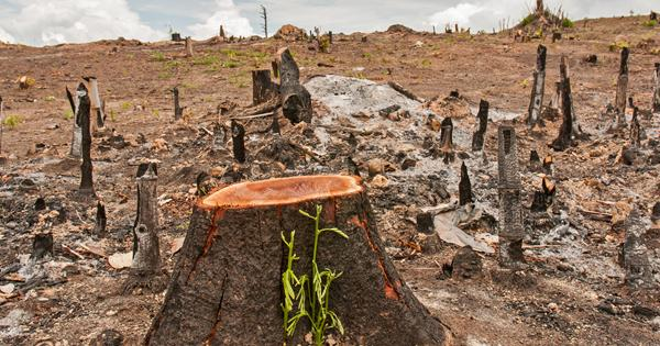 ตัดไม้ทำลายป่า