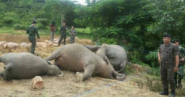 ฆ่าช้าง