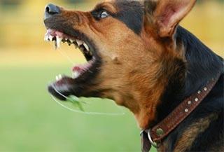 ผลการค้นหารูปภาพสำหรับ พิษสุนัขบ้า