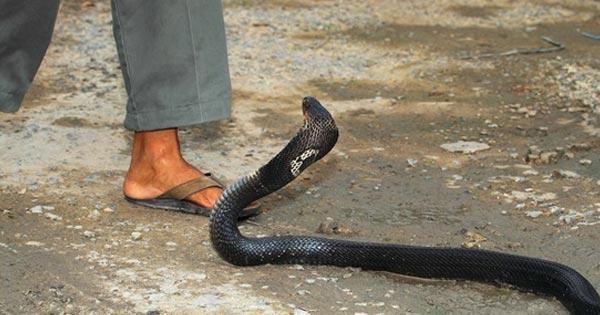 งูกัด